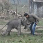 3 dagen oud olifantje, Chitwan. Hij is al erg zwaar en gevaarlijk zijn als je niet op past :)