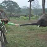Lijnie en olifant in Chitwan