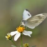 Op de kampeerplek zijn veel vlinders