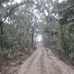 Jeep safari in Chitwan National Park