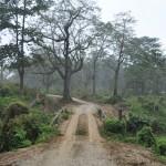Brugje in Chitwan National Park