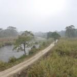 Wetlands in Chitwan