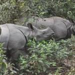Dichtbij de rhino
