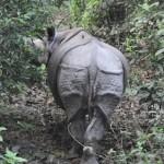 Rhino ass :)