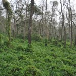 Uitzicht Chitwan