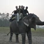 Op de olifant