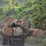 Hardhout gekapt onderweg