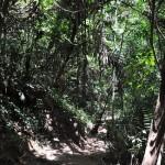 Looproute in Taman Negara