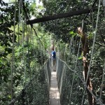 Op de brug van de canopy walk