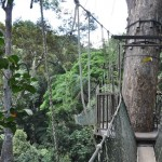 De canopy walk