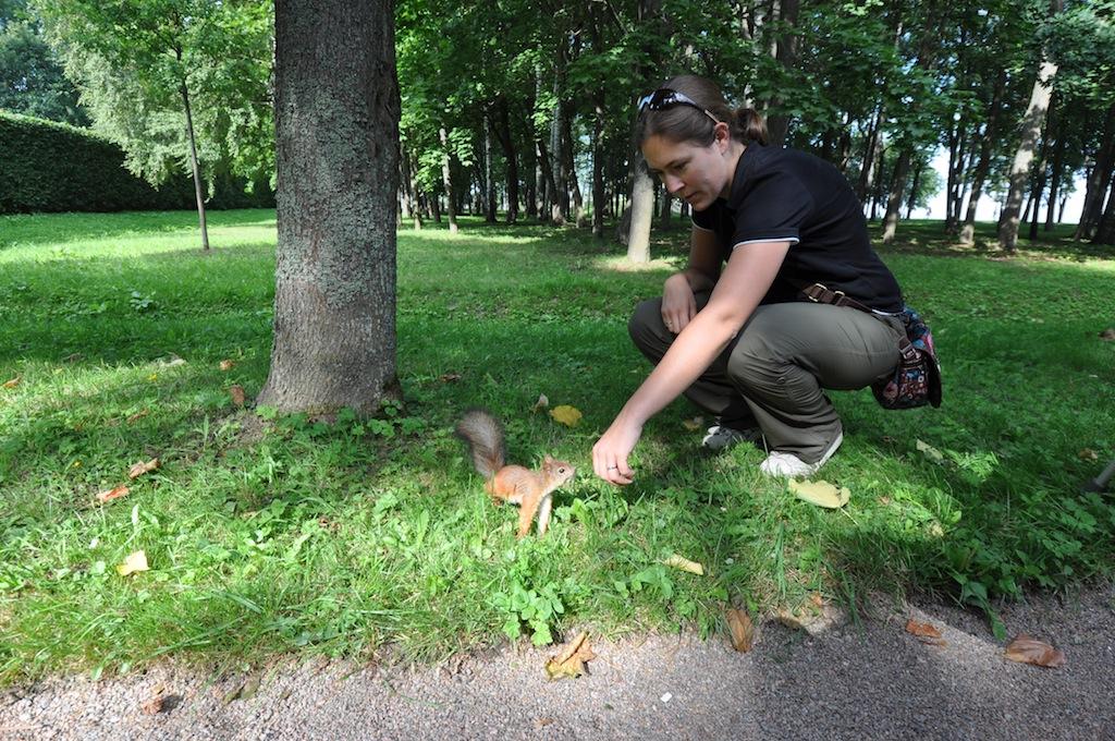 Een (semi-)tamme eekhoorn!